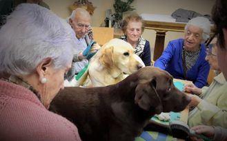 La residencia de mayores Asispa Soto Fresnos implanta terapia canina para sus residentes y usuarios del centro de día
